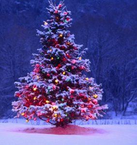 albero di Natale 2019